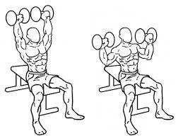 musculation développé épaules