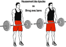 Musculation shrugs ou haussements d